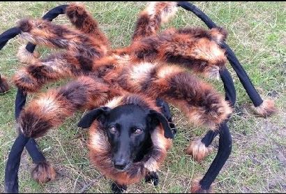 mutant giant spyder dog